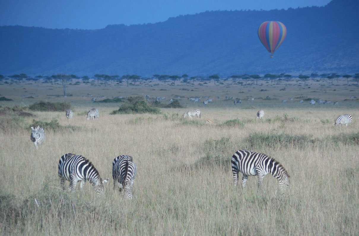 Navy Reserve Spouse Helps Clients Plan the Safaris of Their Dreams